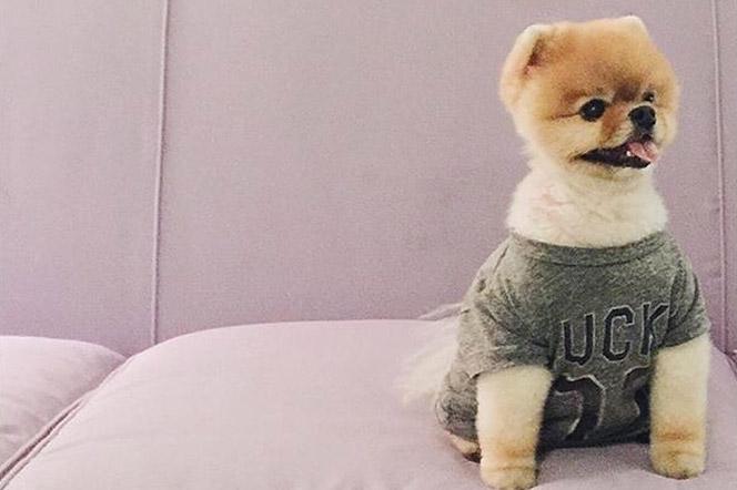 Las 15 mejores cuentas de animales en Instagram