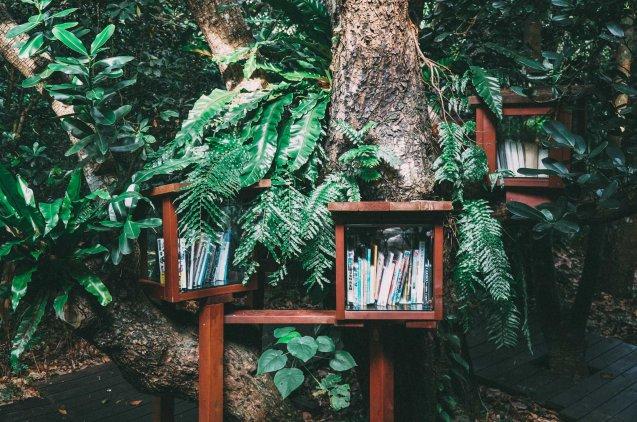 Libros en una estantería colgada de un árbol en medio del bosque