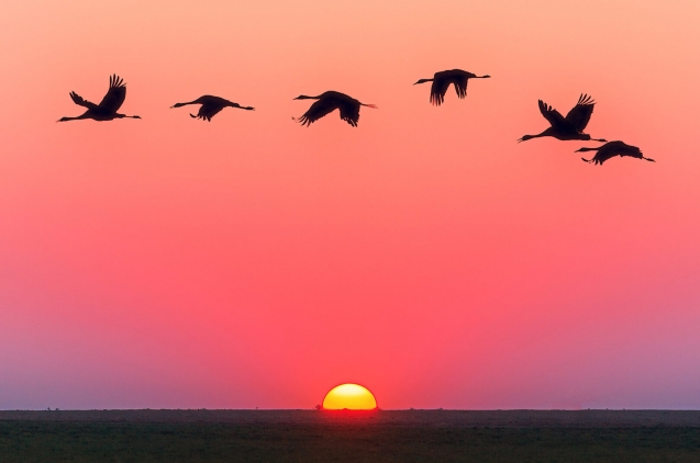 Birds flying over the sunset