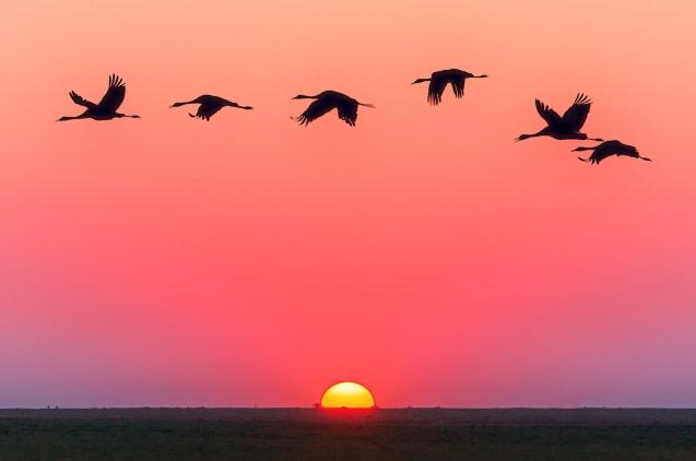 Birds flying over the sunset
